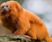 Animais Silvestres em Perigo e Linha com Cerol (3)