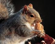 Animais Silvestres em Perigo e Linha com Cerol (4)