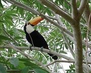 Animais Silvestres em Perigo e Linha com Cerol (9)
