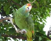Animais Silvestres em Perigo e Linha com Cerol (11)