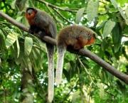 Animais Silvestres em Perigo e Linha com Cerol (12)