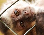 Animais Silvestres em Perigo e Linha com Cerol (13)