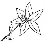 desenhos-de-flores-11