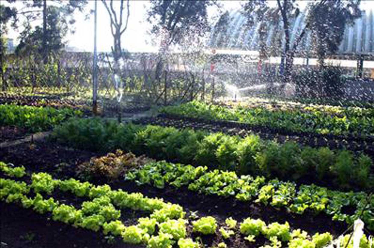 imagens de jardim horta e pomar ? Doitri.com