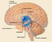 neurotransmissores-importantes-6
