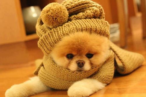Cuidados Com Os Pets No Inverno