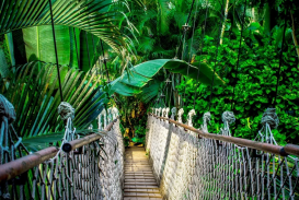 Figura:https://pixabay.com/pt/photos/ponte-p%C3%AAnsil-floresta-tropical-959853/